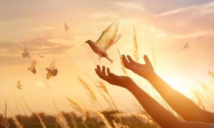 Como encontrar a paz?