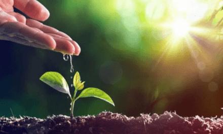 Dia Mundial do Meio Ambiente: não podemos ser saudáveis num mundo doente