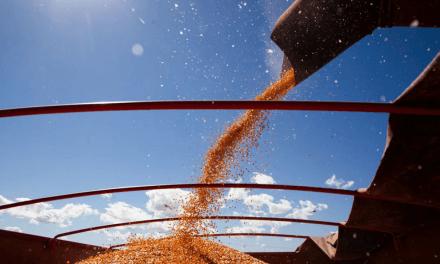 Conab prevê produção recorde de grãos na safra 2020/21